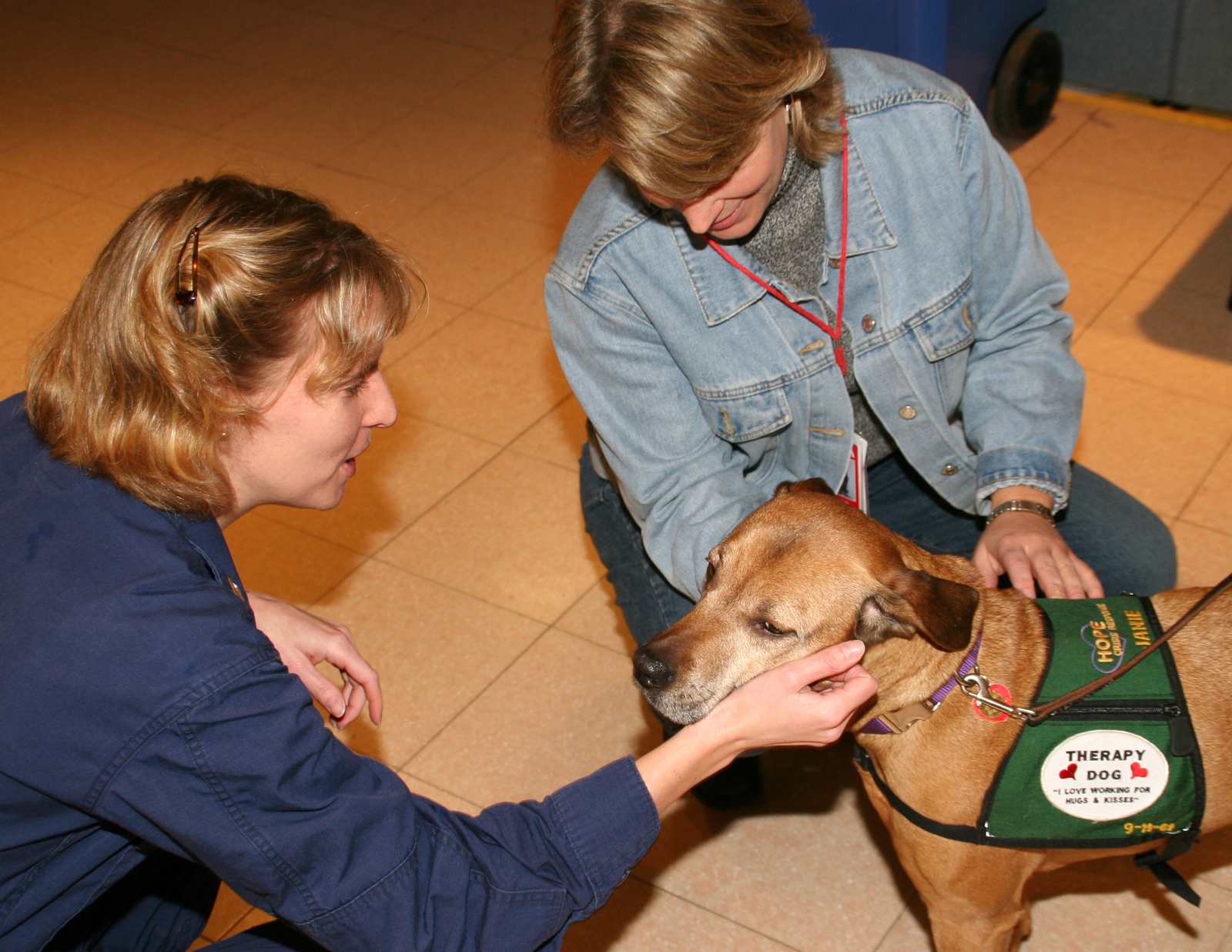 An animal therapy dog being pet.