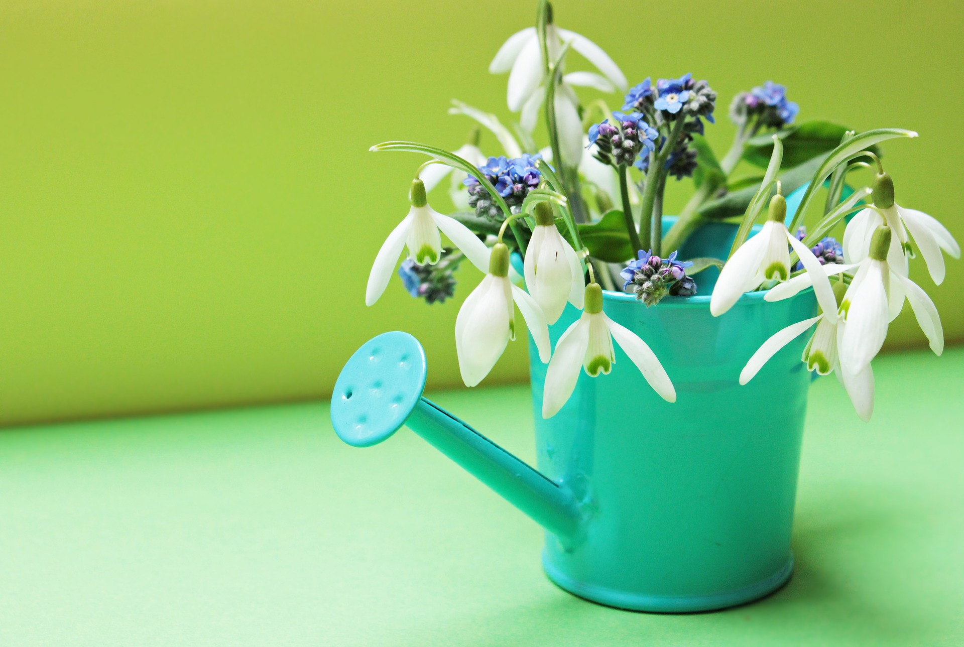 A watering can with flowers in it for springtime.